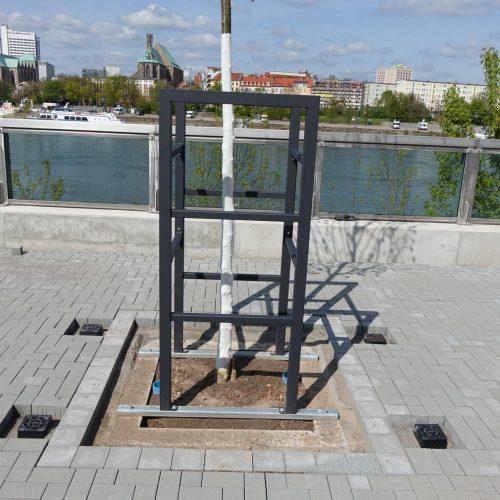 Seitlich angebrachte Gitter bieten zusätzlichen Schutz für die jungen Linden (Tilia Pallida). Foto: Funke Kunststoffe