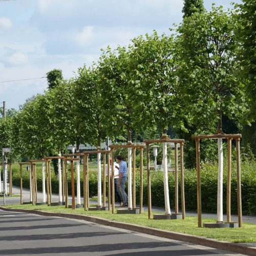 Die neu gepflanzten Bäume an der Bismarckstraße schließen eine Lücke in der Einfassung des Rosengartens und bilden einen Teil der Baumallee. Foto: Funke Kunststoffe GmbH