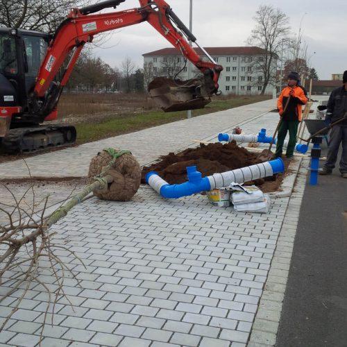 Insgesamt 252 Bäume wurden in den neuen Straßenzügen bereits angepflanzt, die auf dem Areal der ehemaligen US-Kaserne entstanden sind.  Foto: Funke Kunststoffe